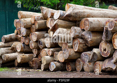 Wood Logs at Chatham Saw Mill Haddo, Port Blair, Andaman - Stock Photo