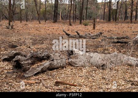 Wilpena Pound South Australia, Autumn in rural arid landscape - Stock Photo