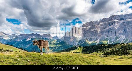 Dolomites Italy - Cow on the pasture - Stock Photo