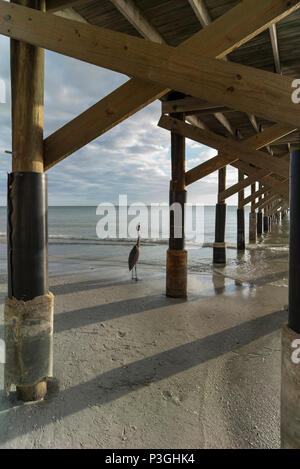 Redington Beach. Florida, USA,  Thursday,  12/10/2017, View, Beach, Grey Heron, 'La Contessa Pier' © Peter SPURRIER, - Stock Photo