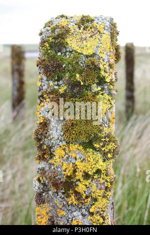 Lichen and Moss On Fencepost - Stock Photo