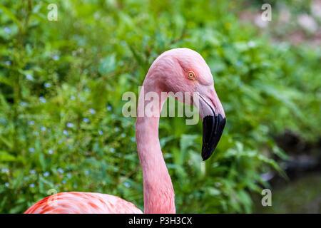 Flamingo. Bird. Animal