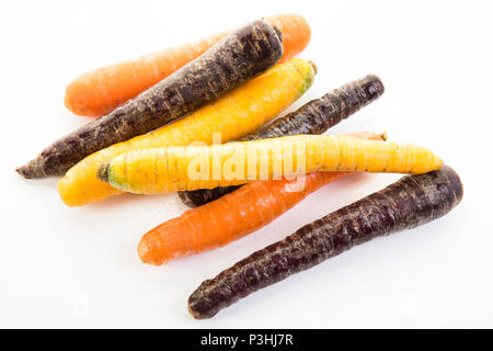 Karotten-Mix, orange, creme und violett farbene Karotten - Stock Photo