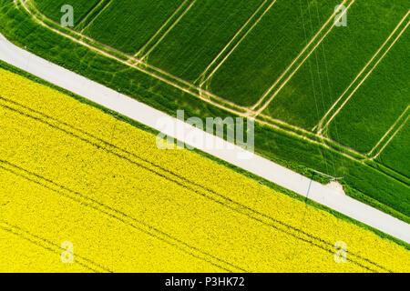 Rapsfeld von oben, Bayern, Deutschland - Stock Photo