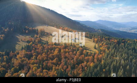 Aerial View over beautiful autumn mountain landscape. Yellow pasture with lonley houses among orange pine tree forest. Mountain range in the background. Holidays, travel. Carpathians, Ukraine, Europe - Stock Photo