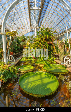 Interior in Garden Society of Gothenburg greenhouse with green plants and a pond Stock Photo