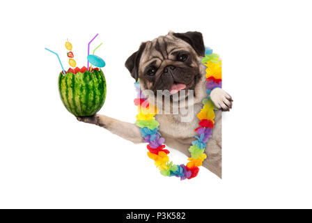 frolic summer pug dog with hawaiian flower garland, holding watermelon cocktail with umbrella and straws, isolated on white background - Stock Photo