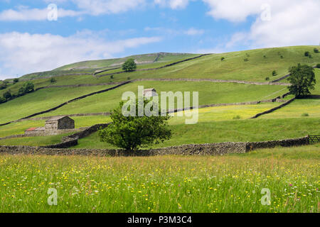 Country scene with field of Buttercups in Pennine countryside in summer. Muker, Swaledale, Yorkshire Dales National Park, North Yorkshire, England, UK - Stock Photo