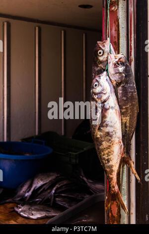 IQUIQUE, CHILE - 19.11.2015: ALTO LOS VERDES - Peixes à venda na Praia los Verdes (Playa los Verdes). (Foto: Ricardo Ribas / Fotoarena) - Stock Photo