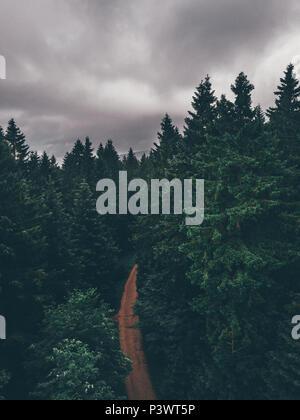 Spazieren im Wald, Waldweg im Tannenwald dunkelgrün, Nationalpark Harz, - Stock Photo