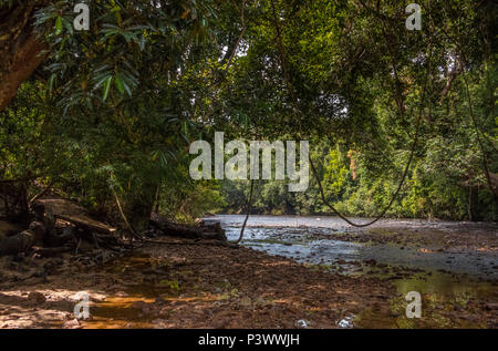 A shaded pebbly riverbank with fallen tree trunks and thick hanging vines at a very shallow part of the Tahan River where boats can't go through. - Stock Photo