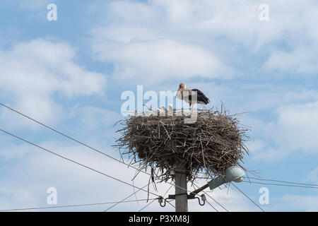 White Stork nest on top of electric pole in the Ukrainian village - Stock Photo