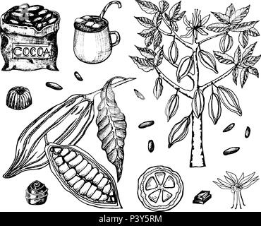 Cocoa beans and hot chocolate. Natural organic product. Seeds of fruit on the plantation. Ripe fruit, tree and an old bag with farm products. trendy cute vector illustration. - Stock Photo