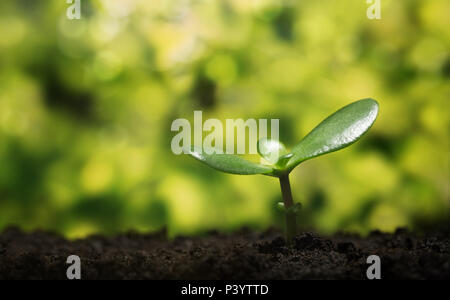 Nature background, symbol. Small plant growing up from the soil with defocused background - Stock Photo