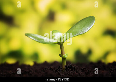 Growth symbol. Small plant growing up from the soil over defocused background with copy space - Stock Photo