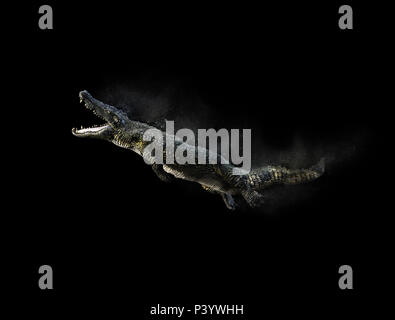 3D Illustration of a green American alligator isolated on grey background, American crocodile. - Stock Photo