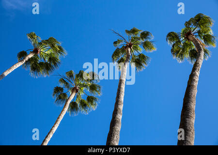 Arecales Palm tree fronds against a blue sky. - Stock Photo