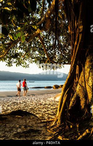 Praia da Daniela ao entardecer. Florianópolis, Santa Catarina, Brasil. - Stock Photo