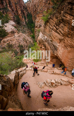 Hikers on Walter's Wiggles, an ingenious set of steep switchbacks on the dangerous Angles Landing trail in Zion national park in Utah, North America. - Stock Photo