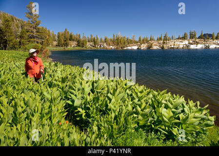 A woman Walking around Half Moon Lake in the Desolation wilderness during a hike in south lake tahoe, California, North America. - Stock Photo