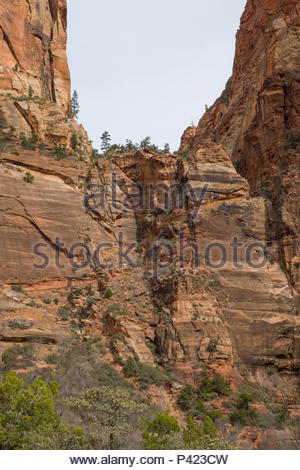 Looking up at the Walter's Wiggles portion of the West Rim Trail consisting of a series of 21 steep switchbacks carved into the sheer cliff face, Zion - Stock Photo