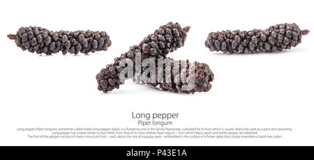 Long pepper (Piper longum) isolated on white background - Stock Photo