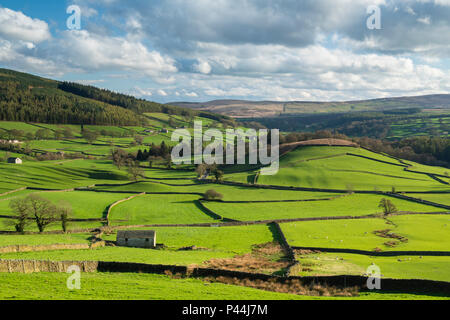 Under dramatic blue sky, long-distance picturesque view to Wharfedale (isolated barns & green pasture in sunlit valley) - Yorkshire Dales, England, UK - Stock Photo
