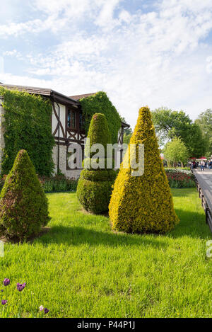 Juicy meadow of the Russian garden is decorated with a triangular Bush, in the city of St. Petersburg. - Stock Photo