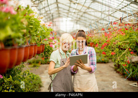 Two senior and young modern florist women  selecting flowers while looking instructions from a tablet - Stock Photo