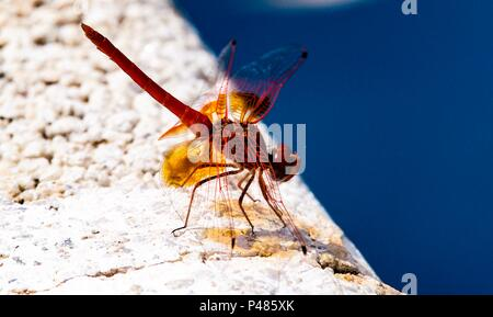 Dragonfly in Los Romanes, Spain - Stock Photo
