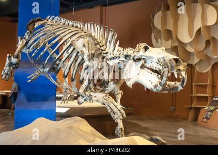 BELO HORIZONTE, MG - 23.07.2015: Museu de Ciências Naturais - PUC MINAS - Coração Eucarístico - BH - MG. (Foto: Mourão Panda / Fotoarena) - Stock Photo