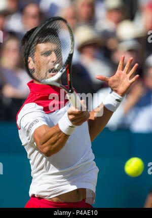 London, UK. 21st June, 2018. Novak Djokovic of Serbia during the Fever Tree Championships (Queens Club Tennis 2018) Day 6 at The Queen's Club, London, England on 21 June 2018. Credit: Andrew Rowland/Alamy Live News - Stock Photo