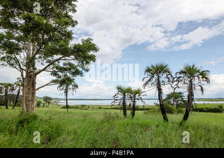 Peaceful lagoon with calm water, trees, palm trees and lush green grass in landscape near N'zeto, Angola, Africa. - Stock Photo