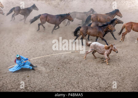 Horsemen dressed in traditional costume holds rope and pole urga or lasso, while herding horses, Xilinhot, Inner Mongolia, Chin - Stock Photo