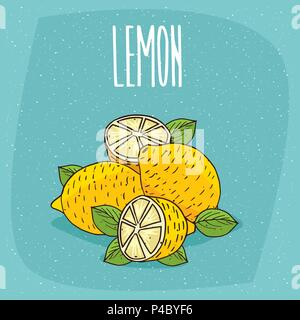 Group of several ripe lemons fruits with leaves, whole and beautifully cut into pieces. Visible flesh. Isolated background. Realistic hand draw style. - Stock Photo
