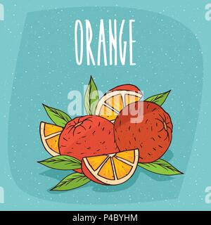 Several ripe oranges fruits with leaves, whole and beautifully cut into pieces. Visible flesh. Isolated blue background. Realistic hand draw style. Le - Stock Photo