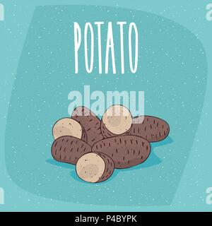 Group of several ripe, russet potato tubers, whole and beautifully cut into pieces. Isolated blue background. Visible flesh. Realistic hand draw style - Stock Photo