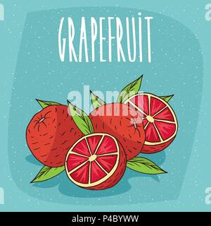 Several ripe grapefruit fruits with leaves, whole and beautifully cut into pieces. Visible flesh. Isolated background. Realistic hand draw style. Lett - Stock Photo