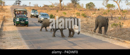 Kruger National Park, South Africa - 6 November 2016: Tourists in safari vehicles, stop on a road in Kruger National Park to watch a herd of elephants - Stock Photo