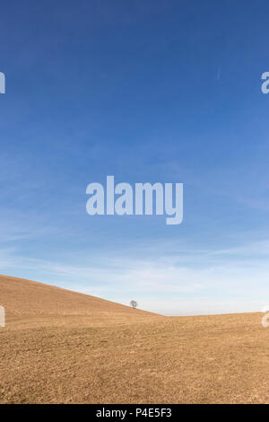 A distant, lonely tree on a bare hill, beneath a blue sky with white clouds - Stock Photo