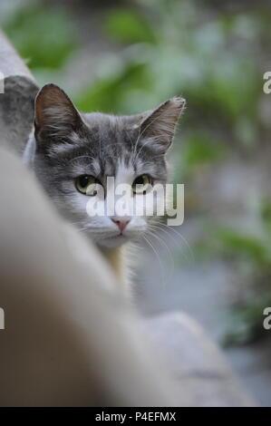 Funny cute street cat stray-cat eyes eye green-eyes wide eyes-open staring camera - Stock Photo