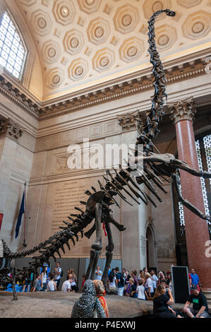 New York City, USA - June 6, 2010: People at the Theodore Roorevelt Rotunda in the American Museum of Natural History, looking at the Barosaurus skele - Stock Photo