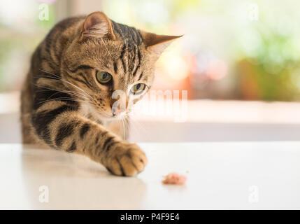 Beautiful feline cat at home. Domestic animal. - Stock Photo