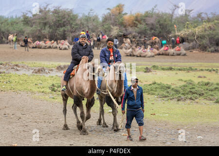 Ladakh, India - June 29, 2017: Unidentified Indian tourists riding camels during safari in Nubra valley in Ladakh, India - Stock Photo