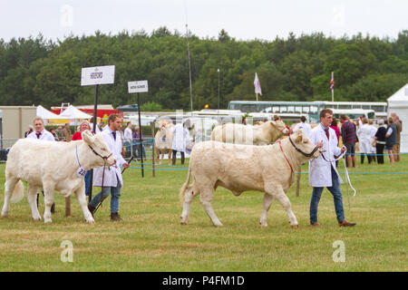 19 & 20 June 2018 - The Cheshire Showground at Clay House Farm Flittogate Lane, Knutsford hosted the 2018 Royal Cheshire County Show. The Show is abou - Stock Photo