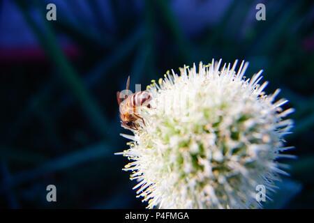 the bee gather honey - Stock Photo