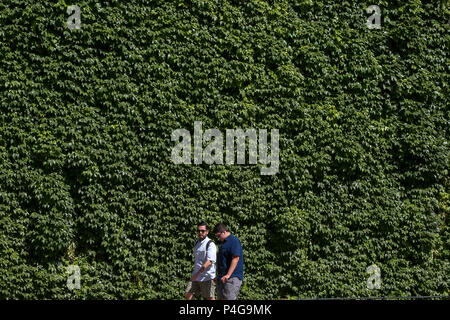St James Park. London. UK 22 June 2018 -  Men walk past a garden wall covered with vibrant green tropical plants foliage. Much of the UK is expected to enjoy hot and sunny weather over the weekend with temperature expected to reach 25 degrees celsius in parts of the country.  Credit: Dinendra Haria/Alamy Live News - Stock Photo
