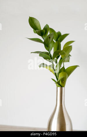 Green Filler Plant Leaves in a Silver Vase on a Light Background, also known as Ruscus - Stock Photo