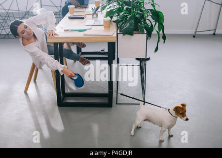 businesswoman holding jack russel terrier on leash and colleague sitting behind on table in modern office - Stock Photo
