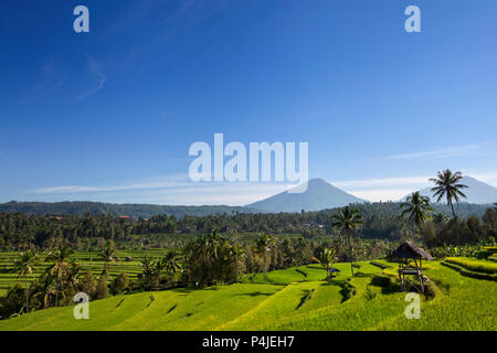Agung volcano on the sunrise, Bali island in Indonesia - Stock Photo